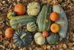 Thumbnail Various squashes in autumn