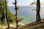 Thumbnail Beech forest and chalk cliffs on the Baltic Sea in the Jasmund National park, Jasmund peninsula, Ruegen Island, Mecklenburg-Western Pomerania, Germany, Europe