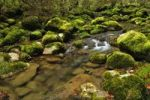 Thumbnail Moss covered rocks alongside the Orbe River, Vallorbe, Jura, Switzerland, Europe