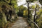 Thumbnail Path to the Drachenfels hill, nature reserve, Koenigswinter, North Rhine-Westphalia, Germany, Europe
