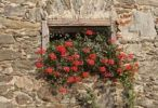 Thumbnail Geraniums in a window, old farm, Keutschach am See, Carinthia, Austria, Europe