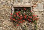 Thumbnail Geraniums in a window, old farm, Keutschach am See, Carinthia, Austria, Europe