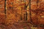 Thumbnail Secluded woodland path in autumn