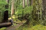 Thumbnail hiker in Sol Duc valley of Olympic National Park