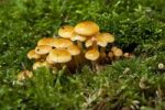 Thumbnail Mushrooms in the moss