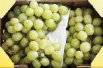 Thumbnail Green grapes in a transport carton