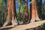 Thumbnail Sequoias in Foresta, Yosemite West, Yosemite National Park, California, USA, North America