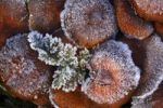 Thumbnail Ice crystals on fungi and branches