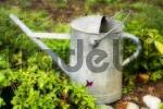 Thumbnail watering-can