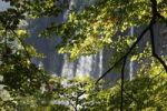 Thumbnail Beech branches in front of a waterfall, Plitvice Lakes National Park, Plitvice Jezera, Croatia, Europe