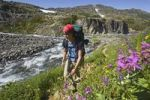 Thumbnail Young woman hiking, backpacking, hiker with backpack, blooming alpine flowers, historic Chilkoot Pass, Chilkoot Trail, creek behind, alpine tundra, Yukon Territory, British Columbia, B. C., Canada
