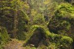 """Thumbnail """"Malerstrasse"""" gorge in the Uttewalder Grund valley, autumn, Saxon Switzerland, Saxony, Germany, Europe"""