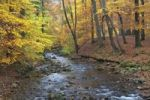 Thumbnail Ilse brook in autumn, Ilsetal valley, Harz region, Saxony-Anhalt, Germany, Europe