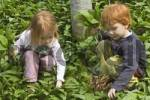 Thumbnail girl and boy are picking ramson allium ursinum bears garlic wood garlic