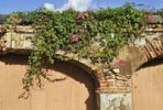 Thumbnail Arches, dilapidated and overgrown with Russian vine or silver lace vine (Fallopia), Frederiksted, St. Croix island, U.S. Virgin Islands, United States