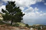 Thumbnail Pines on the east coast of the island of Karpathos, Aegean Islands, Dodecanese, Aegean Sea, Greece, Europe