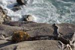 Thumbnail Rocks on the west coast, island of Karpathos, Aegean Islands, Dodecanese, Aegean Sea, Greece, Europe
