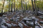 Thumbnail Autumnal beech forest with rocks, Risnjak National Park, Gorski Kotar region, Croatia, Europe