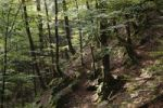 Thumbnail Montane forest, Risnjak National Park, Gorski Kotar region, Croatia, Europe