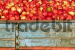 Thumbnail Apples on a Transporter near Lake Constance, Baden-Württemberg, Germany, Europe