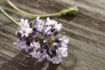 Thumbnail Lavender (Lavandula)
