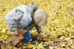 Thumbnail A little boy collecting autumn leaves, Germany, Europe