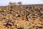 Thumbnail Stony Hamada desert landscape on the Mesak Settafek Plateau, Fezzan, Libya, Africa