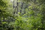 Thumbnail Alluvial forest, Isar wetlands, Geretsried, Bavaria, Germany, Europe
