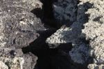 Thumbnail Crack in lava rock with lichens, Lanzarote, Canary Islands, Spain, Europe