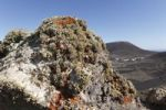 Thumbnail Lichens on rocks, Risco de Famara, Lanzarote, Canary Islands, Spain, Europe