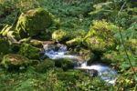 Thumbnail The Alb creek near Bad Herrenalb in Black Forest, Baden-Wuerttemberg, Germany, Europe