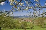 Thumbnail Spring landscape near Loffenau, Black Forest, Baden-Wuerttemberg, Germany, Europe