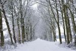 Thumbnail Tree-lined avenue in winter
