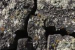 Thumbnail Cracks in a lava field with lichens, Lanzarote, Canary Islands, Spain, Europe