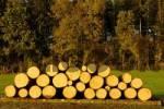 Thumbnail Cut off wood trunks in autumn