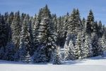 Thumbnail Winter landscape with snowy pine forest in the Jura mountains, St. Cergue, Switzerland, Europe
