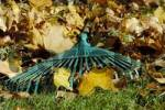 Thumbnail autumn foliage and rake, gardening in autumn