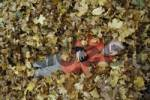 Thumbnail Nine-year-old boy lies in the autumn foliage
