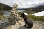 Thumbnail Sled dog, pack dog with pack, Alaskan Husky, resting at Inukshuk, cairn, as trail marker, Deep Lake behind, Chilkoot Trail, Chilkoot Pass, Yukon Territory, British Columbia, B. C., Canada
