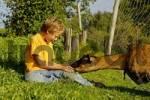 Thumbnail nine-year-old boy is feeding a goat with fresh grass