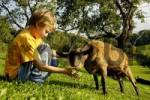 Thumbnail nine-year-old boy is feeding a goat with fresh grass