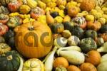 Thumbnail different pumpkins for decoration and cooking