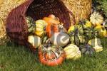 Thumbnail different pumpkins for harvest decoration