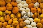 Thumbnail orange and white pumpkins