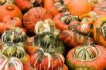 Thumbnail colored pumpkins for decoration