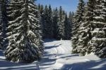 Thumbnail A deserted groomed cross-country ski trail passing through a snowy pine forest in the Jura Mountains, St. Cergue, Switzerland, Europe
