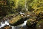 Thumbnail River Bode in the Harz mountains, between Elend and Schierke in Elendstal valley, Saxony-Anhalt, Germany, Europe