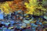 Thumbnail autum leaves in water - Bavaria Germany
