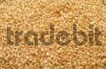 Thumbnail round grain rice