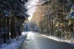 Thumbnail Wintery road leading through a sunny mixed forest, Bavaria, Germany, Europe